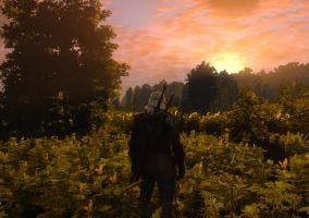 The Witcher 3 terrenos cultivo